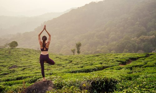 Woman,In,Violet,Cloth,Doing,Yoga,On,Tea,Plantations,In